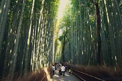 ISAACKIAT_200063 (Isaac Kiat ( I K Productions)) Tags: japan landoftherisingsun nippon osaka kyoto gion shrine train station hawkers starbucks cafe kinosaki streets night kimono fushimi inaritaisha