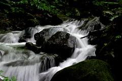 OIRASE (tez-guitar) Tags: river stream fall water forest wood sigma green summer pentax pentaxart