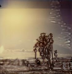 Venice Beach Palms 2 (tobysx70) Tags: polaroid sx70 sonar emulsion manipulation time zero tz instant film venice beach palms los angeles la california ca palm trees pacific ocean santa monica bay sun toby hancock photography