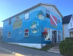 Fish on wall of Brockville dive show (stephenweir) Tags: fauxfishmural fauxfishart diveflag mural diveshop brockville perch bass painting artwork bluediveshop ontario stlawrenceriver