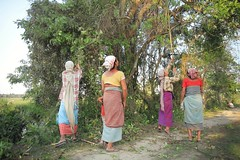 Majuli Island (fredcan) Tags: india northeastindia assam majuli island riverisland women ladies villagers mising adivasi tribal indians assamese group peopleofindia woodchore tree traditionaldress countryside ruralindia daulylife travel fredcan
