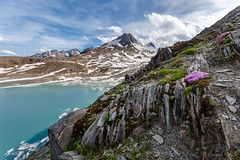 Griessee with flowers (cfaobam) Tags: griessee griesgletscher schweiz wasser stein stone landscape landschaft europe europa nature national geographic cfaobam water travel photography magic light rock steine felsen cfaobamhome outdoor felsformation ufer berg mountains alpen