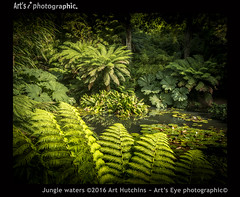 Jungle Waters (Art's Eye photographic) Tags: ferns treeferns palms bamboo waterlillies dicksoniaantarctica gunneramanicata cyatheales arboreal thejungle giantrhubarb