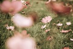 (Wi ) Tags: flower beautiful