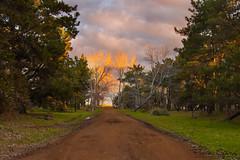 Camino (FlavioSpezia) Tags: arbol atardecer camino arena bosque nubes barro