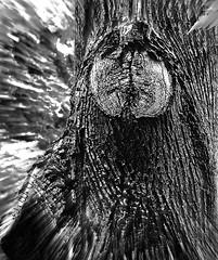 La dame voilée وخلق الله المرأة (Pierre Éthier) Tags: trees blackandwhite macro art visage figuratif treesubject artfiguratif macromix