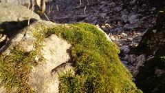 Mossy stone (Brian Aslak) Tags: norway rock stone forest norge moss woods europe skog scandinavia lier stlandet tranby buskerud hennummarka