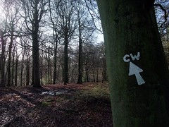 """Chiltern Way through Greenfield Wood • <a style=""""font-size:0.8em;"""" href=""""http://www.flickr.com/photos/41849531@N04/17014907208/"""" target=""""_blank"""">View on Flickr</a>"""