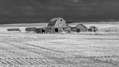 Rural Dreams (westrock-bob) Tags: old morning blackandwhite bw copyright canada field clouds barn canon eos spring amazing ab pasture alberta barbedwire weathered grayscale agriculture stubble greyscale 6d threehills grainbin albertabadlands albertatourism canon6d tourismalberta kneehillcounty canoneos6d bobcuthillphotographygmailcom bobcuthill