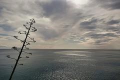 Standing (Ciccio Pizzettaro) Tags: sea italy liguria horizon future cinqueterre