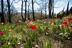 (Lilith Ecate) Tags: flowers flores flower grass alberi contraluz flor fiori fiore petali prato controluce sigurt
