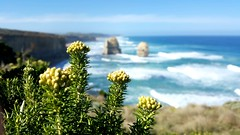 "In focus ~ Great Ocean Road, Australia !! • <a style=""font-size:0.8em;"" href=""http://www.flickr.com/photos/125709329@N04/17144155195/"" target=""_blank"">View on Flickr</a>"