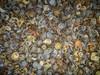 """Coconut Debris <a style=""""margin-left:10px; font-size:0.8em;"""" href=""""http://www.flickr.com/photos/41134504@N00/17347240682/"""" target=""""_blank"""">@flickr</a>"""