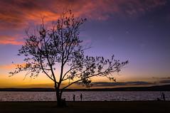 Grdony, naplemente - Sunset at lake Velence, Grdony (Bela Lindtner) Tags: belalindtner lindtnerbla grdony magyarorszg hungary naplemente sunset outdoor tree fk felhk clouds nikon nikond7100 d7100 nikkor 18105 nikkor18105 nikon18105
