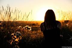 Sunset (Viictor B) Tags: sun sunset sunrise sunshine sky day light gold women woman beautiful gorgeous life photographie photography flower fleurs canon twlight