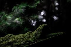 Mossy roof (kurumaebi) Tags: green nature landscape moss nikon d750 yamaguchi