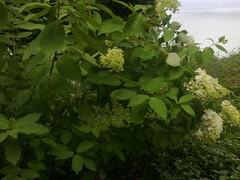 Botanical_Garden_Batumi (5) (Sasha India) Tags: travel georgia journey jardimbotnico botanicalgarden jardinbotanique batumi   gorgie excurso acara    adjara      botanikbahesi         grcstan        nbatatba          acarstan sfr