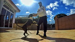 My best friend! (JOSE LUIS VELO) Tags: jump jumping spain huelva coco myboy mydog matalascaas missinghim gopro goprohero4 hero4silver goprohero4silver