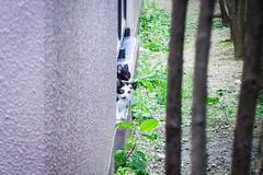 Today's Cat@2016-07-19 (masatsu) Tags: cat pentax catspotting mx1 thebiggestgroupwithonlycats