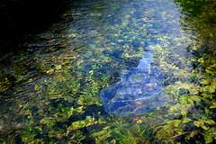 Under flowing water: Makala Waterman Ukulele (FHgitarre) Tags: crazy ukulele waterman soprano makala