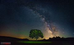 Milky way above Ozren (ivandragutinovic) Tags: light sky panorama tree night way stars landscape long exposure outdoor sony ivan astro galaxy astrophotography serene alpha milky a7 milkyway polution scorpius ozren sokobanja dragutinovic ivandragutinovicphotography