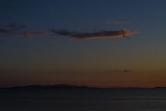Fly Away From Here (Marcello Iaconetti Photography) Tags: sunset red sea sky cloud bird nature landscape island nikon elba tramonto mare nuvola seagull cielo nikkor gabbiano golfo isola 5014 d600 follonica