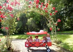 Rosenreslis auf groer Fahrt ... (Kindergartenkinder) Tags: dolls himstedt annette kindergartenkinder essen park gruga garten kind personen annemoni milina sanrike tivi rosengarten