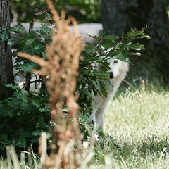 I see you... ! (Carahiah) Tags: observation rhodes regard cachecache saintecroix curieux parcanimalier parcanimalierdesaintecroix