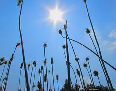 Con gli occhi di una formichina (PennadiFata.it) Tags: summer sky sun green eyes occhi cielo sole formica pianta caldo