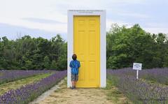 _W1A0495 (Ghorvei) Tags: ghorvei ghorveiphotography ontario lavender boy door field plants trees canada terrebleu yellowdoor