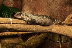 Acuario Agosto 2016 (51) (Fernando Soguero) Tags: acuario zaragoza acuariodezaragoza aragn turismo aquarium nikon d5000 fsoguero fernandosoguero