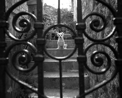 Old Town Dubrovnik(13) (S.R.Murphy) Tags: aug2016 canon6d croatia dubrovnik socialdocumentary streetphotography frame gate dog pet bw blackandwhite canon24105mmf4l inexplore flickrexplore29082016 monochrome