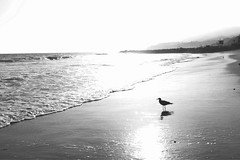 Breath (Anemic Amour) Tags: monocromo biancoenero paesaggio bagnasciuga costa allaperto litorale acqua oceano ocean pacifico gabbiano seagull santamonica losangeles california sea tramonto sunset
