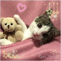 Es wird noch gekuschelt ... Gute Nacht wnschen wir  #blogger #bloggers #cat #instacat #instacatsgram #babycat #cute #love #lovely #kuscheln #kuschelnimbett #goodnight #gutenacht #picoftheday (biancawirmannbakker) Tags: blogger bloggers cat instacat instacatsgram babycat cute love lovely kuscheln kuschelnimbett goodnight gutenacht picoftheday