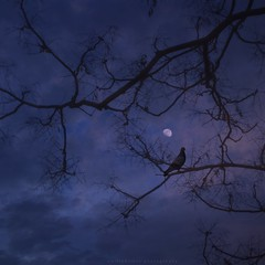 The bird and the moon (emilioramos59) Tags: moon bird branches nature textures tree