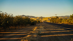Sun Stripes (stuanderson7) Tags: outdoor road sunrise countryroad orchard mountains sky nature trees powerlines gravel desert