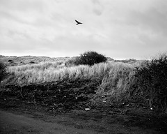 A Bird In The Sky - Blyth (Richard James Palmer) Tags: mamiya7ii mamiya 7ii 80mm ilford hp5 ilfordmicrophen microphen ishootfilm shoot film iso 400 iso400 ilfordhp5 f4 newcastle northeast north east street photography landscape black white rangefinder medium format 120 filmisnotdead analogue documentary epsonperfectionv700 epson v700 1125 landscapes newcastleupontyne upon tyne tyneandwear northern uk england urban melancholy art fineart new overcast isolated walkabout 2016 gritty gloomy trapped blackandwhite monochrome