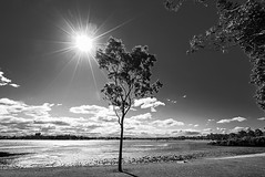 DSC01507 (Damir Govorcin Photography) Tags: water canada bay sydney zeiss 1635mm sony a7ii sun sky clouds australia