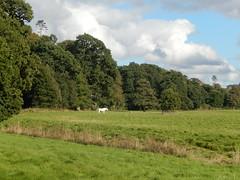 White Horse at Floors Castle (turbostar171) Tags: floors castle scotland roxburgh