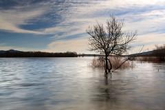 instinto de supervivencia  EXPLORE frontpage (RalRuiz) Tags: longexposure espaa agua cielo nubes rbol manzanareselreal comunidaddemadrid largaexposicin embalsedesantillana