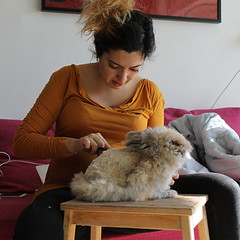 zuzu getting a haircut (lilirious) Tags: bunnies angora bam zuzu 2015