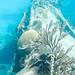 Muita beleza submarina