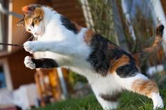 Pippi (Spieler Family) Tags: cats garden garten katzen