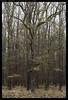 _8B18920 copy (mingthein) Tags: trees winter tree nature zeiss t landscape nikon republic czech availablelight apo carl ming planar otus 1485 onn 8514 d810 thein zf2 photohorologer krivoklatsko mingtheincom mingtheingallery
