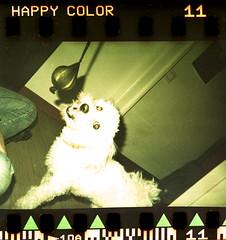 happy color (Max Miedinger) Tags: camera dog milan color film rollei happy films mambo milano negative novelty epson kit selfdeveloped c41 pellicola v700 rullino selfdevelop fruttolo colorchem