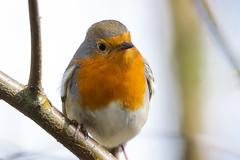 robin (scadesign) Tags: wildlife yorkshire trust