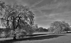 The Great Stour, Godmersham (Aliy) Tags: trees blackandwhite white black tree rural river blackwhite kent village willow willows stour godmersham greatstour