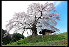 nEO_IMG_DP1U3300 (c0466art) Tags: old trip travel flower tree green beautiful grass japan stone canon landscape temple spring big scenery little god country hill age bloom april sakura 2015 1dx c0466art