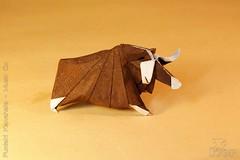 Fumiaki Kawahata - Musk Ox (IverRu) Tags: animal ox musk iver kawahata