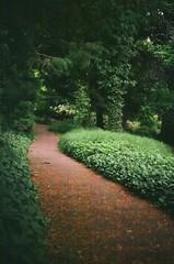 heaven (undertovv) Tags: 35mm botanic garden green heaven nature calmness